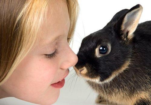 Вибираємо домашню тварину по дитячому зодіаку